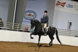 107 MOR Hunter Pleasure Junior Championship