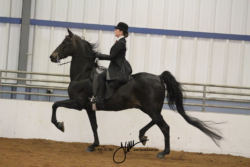 116 MOR Saddle Seat Equitation Championship