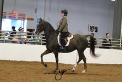 120 MOR Walk-Trot Hunt Seat Equitation Championship
