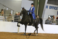 121 MOR Classic Saddle Championship