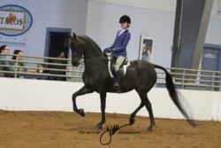 122 MOR Hunt Seat Equitation Championship