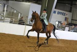 124 MOR Walk-Trot Saddle Seat Pleasure Championship