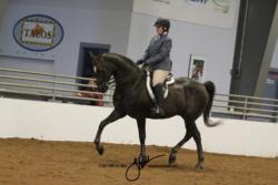 126 MOR Sport Horse Saddle Championship