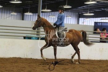 045 Open Walk-Trot Equitation All Ages