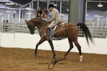 048 HA-AA Hunter Pleasure Junior Horse