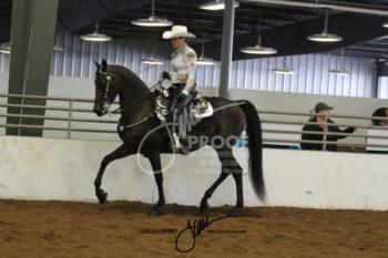 053 MOR Western Pleasure Jr Horse