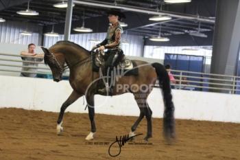 062 Arabian Western Pleasure Jr Horse