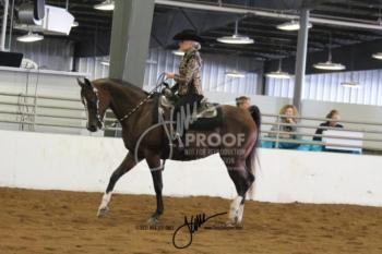 066 HA-AA Western Pleasure AATR
