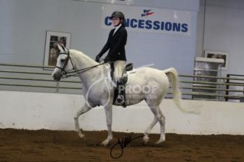 069 Arabian Hunter Pleasure AATR