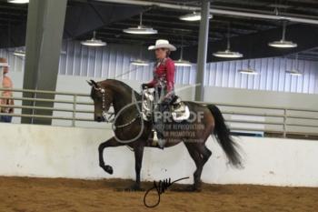 071B MOR Western Pleasure Novice Horse