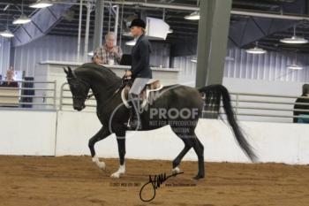 075 Arabian Hunter Pleasure Open
