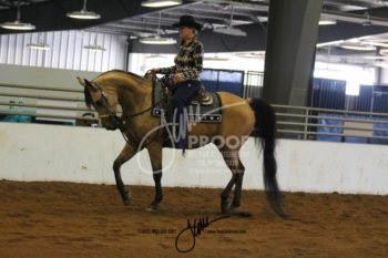 080 HA-AA Western Pleasure Jr Horse