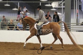 094 Arabian Hunter Pleasure AAOTR
