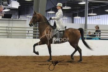 095 MOR Classic Saddle Ladies