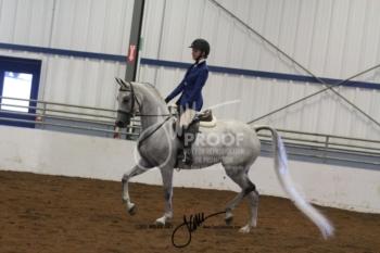 098 Arabian Hunter Pleasure JTR Select