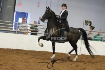 98A Saddle Seat Equitation