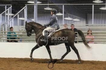 105 MOR Sport Horse Under Saddle