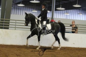 106 HA-AA Sport Horse US Open