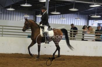 112 Arabian Sport Horse US Open