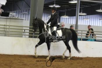 113 HA-AA Sport Horse US Ladies & Gents