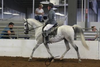 115 Arabian Sport Horse US ATR