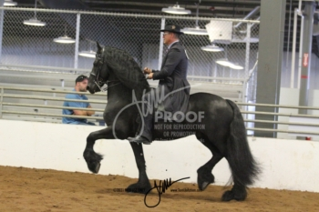118 Open Walk-Trot Equitation