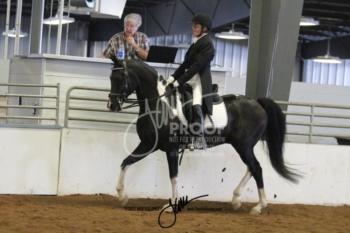 122 HA-AA Sport Horse Show Hack