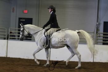 127A Arabian SHUS Limit Horse