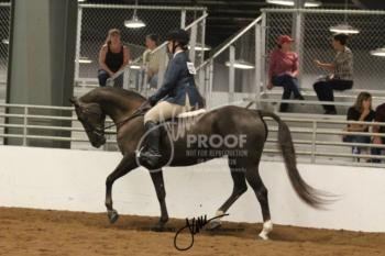 141 MOR Sport Horse Under Saddle Championship