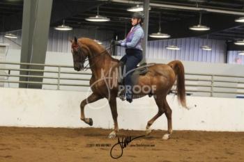 414-415 W-T-C Saddle-Hunt Seat Adult