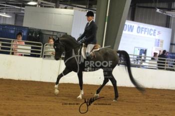 180 Arabian Hunter Pleasure Open Championship