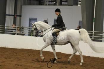 164 Arabian Hunter Pleasure AATR Championship