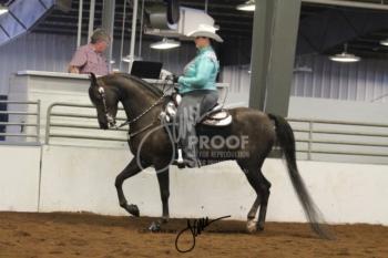 165A MOR Western Pleasure Amateur Championship