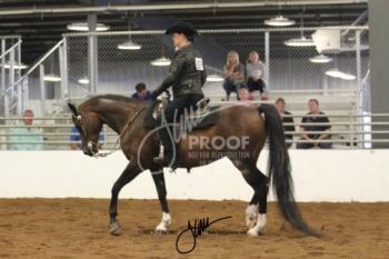 170 HA-AA Western Pleasure AATR Championship